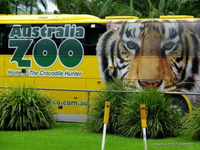 australia-zoo-animals-001
