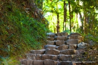 springbrook-national-park-steps
