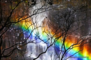 springbrook-national-park-waterfall-rainbow