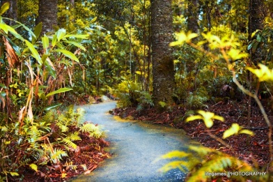springbrook-national-park-yellow-walking-path