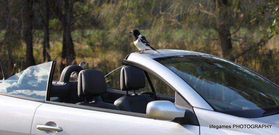 Coombahbah-Lakelands-Conservation-Area-Birds-012