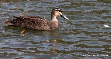 Coombahbah-Lakelands-Creek-Reserve-022