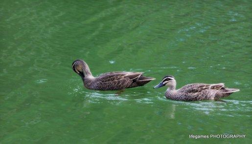 Coombahbah-Lakelands-Creek-Reserve-170
